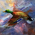 Mallard In  Flight by Gail Salitui