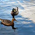 Mallards Lake Hopatcong Nj by Maureen E Ritter