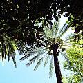 Mallorca Dates Three by Tina M Wenger