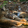 Mama And Her Babies  by Davids Digits