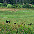 Mama Bear And 4 Cubs by Mary Lee Dereske