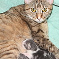 Mama Cat And Her Kittens by Michelle Powell