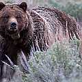 Mama Grizzly by Natural Focal Point Photography