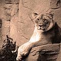 Mama Lion by Richelle Munzon