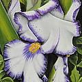 Mama's Favorite Iris by Karen Beasley