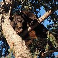Mama's In The Tree by Tammy Burgess