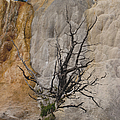 Mammoth Formation  #0290 by J L Woody Wooden