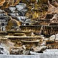 Mammoth Hot Springs - Yellowstone by Belinda Greb