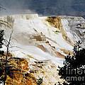 Mammoth Springs Yellowstone Steam Rising by Ron  Tackett