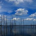 Manasquan Reservoir Panorama by Raymond Salani III
