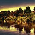 Manatee Island 1 by Michael Schwartzberg