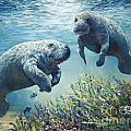Manatee's by Laurie Hein