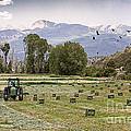Mancos Colorado Landscape by Janice Pariza