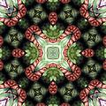 Mandala 113 by Terry Reynoldson