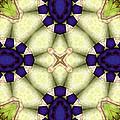 Mandala 115 by Terry Reynoldson