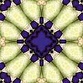 Mandala 118 by Terry Reynoldson