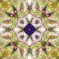 Mandala 127 by Terry Reynoldson