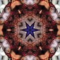 Mandala 14 by Terry Reynoldson