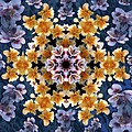 Mandala Alstro by Nancy Griswold