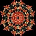 Mandala Daylily by Nancy Griswold
