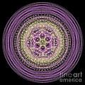 Mandala Of Wisdom by Martin Capek