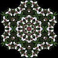 Mandala Trillium Holiday by Nancy Griswold