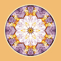 Mandalas From The Heart Of Transformation No. 12 by Atmara Rebecca Cloe