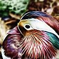Mandarin Duck by Douglas Barnard