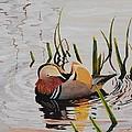 Mandarin Duck by Santo De Vita