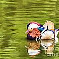 Mandarin Reflection by Liz Leyden