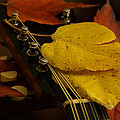 Mandolin Autumn 6 by Mick Anderson