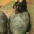 Mandrill On The Look Out by Raymond  Mays