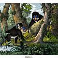 Mandrill by Splendid Art Prints