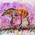 Maned Wolf by Zaira Dzhaubaeva
