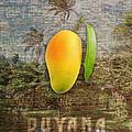 Mango Season by Mark Khan