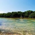 Mangrove @ Safehaven Sound by Amar Sheow