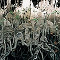 Mangrove Aerial Roots by DC Prints