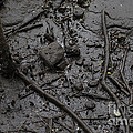 Mangrove Floor by Stephen Holland