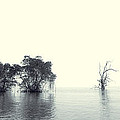 Mangrove Forest By The Sea by Ernst Cerjak