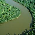Mangrove Rhizophora Sp In Mahakam Delta by Cyril Ruoso