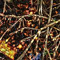 Mangrove Root by S Paul Sahm