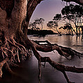 Mangrove Roots by Robert Charity