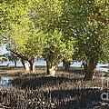 mangroves Madagascar 3 by Rudi Prott