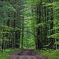 Manistee National Forest Michigan by Steve Gadomski