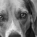 Man's Best Friend In Black And White by Kathy Clark