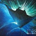 Manta At The Surface by Lisa Pope