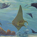 Manta Ray by ACE Coinage painting by Michael Rothman