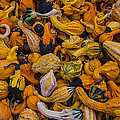 Many Colorful Gourds by Garry Gay