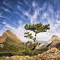 Many Glacier Tree by Timothy Hacker