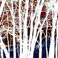 Many Trees by Kathy Sampson